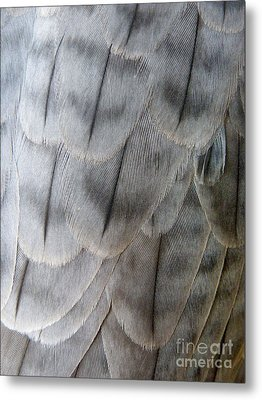 Barbary Falcon Feathers Metal Print