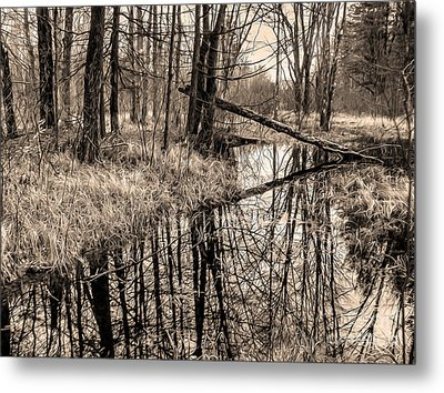 Metal Print featuring the photograph Bare Bones by Betsy Zimmerli