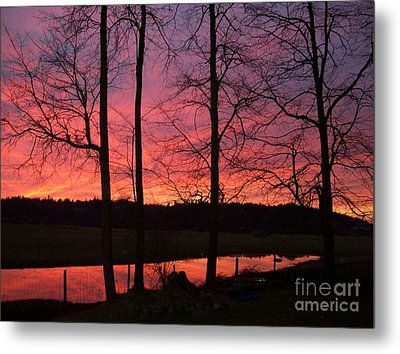 Metal Print featuring the photograph Bare Branches II by Cody Williamson