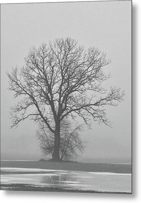 Bare Tree In Fog Metal Print