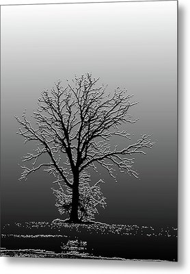 Bare Tree In Fog- Pe Filter Metal Print by Nancy Landry