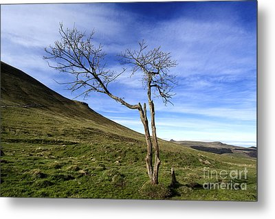 Bare Tree In The Mountain. Auvergne. France Metal Print by Bernard Jaubert