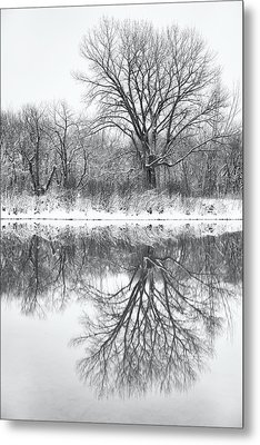 Metal Print featuring the photograph Bare Trees by Darren White