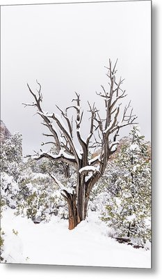 Bark And White Metal Print by Laura Pratt
