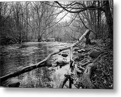 Bark In The Water Metal Print