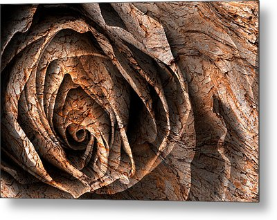 Barking Rose Metal Print by Nicolas Raymond