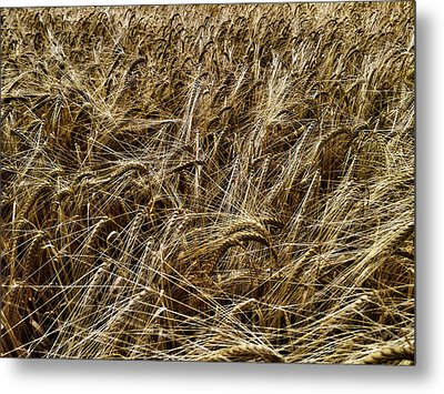 Metal Print featuring the photograph Barley by RKAB Works
