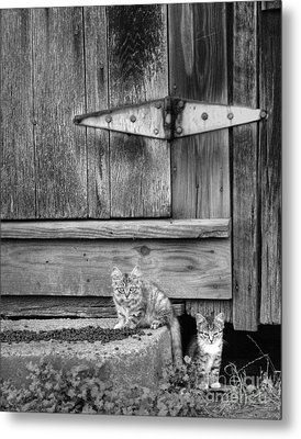 Metal Print featuring the photograph Barn Cats by Pete Hellmann