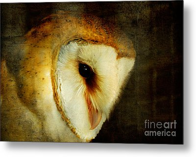 Barn Owl Metal Print by Lois Bryan