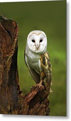 Barn Owl On Bark Metal Print