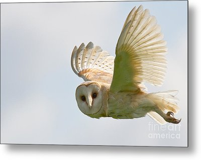 Barn Owl Metal Print by Ruth Hallam