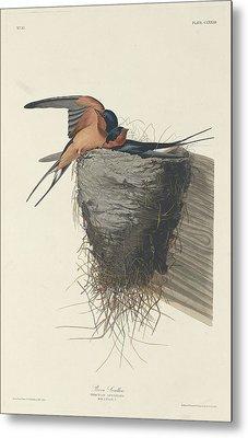 Barn Swallow Metal Print by Rob Dreyer