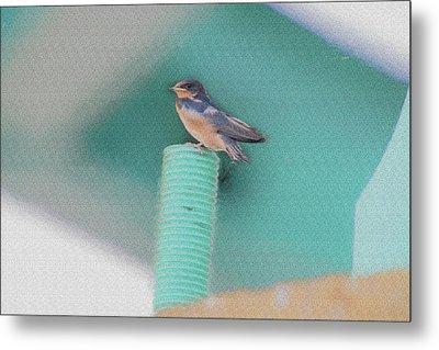 Barn Swallow Posing On Perch....paintography Metal Print by Dan Friend