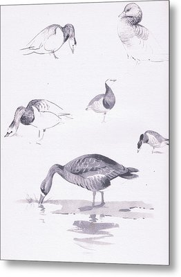 Barnacle And White Fronted Geese Metal Print by Archibald Thorburn