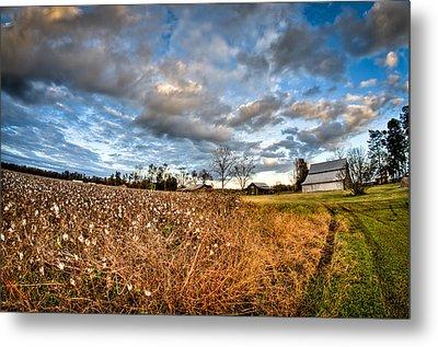 Barns And Cotton Metal Print