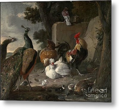 Barnyard Fowl And Peacocks Metal Print