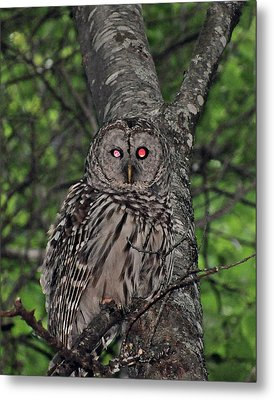 Metal Print featuring the photograph Barred Owl 3 by Glenn Gordon
