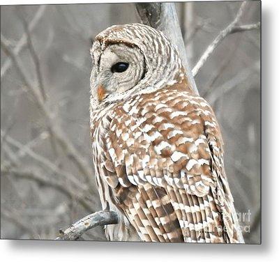 Barred Owl Close-up Metal Print