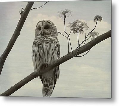 Barred Owl On A Tree Metal Print
