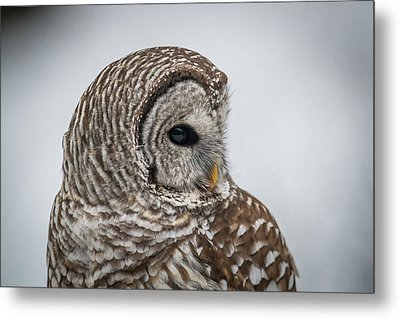 Metal Print featuring the photograph Barred Owl Portrait by Paul Freidlund