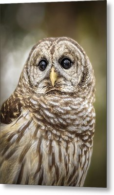Metal Print featuring the photograph Hoot by Steven Sparks