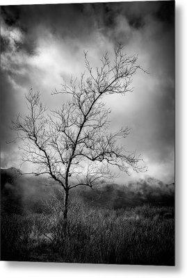 Barren Tree 1 Metal Print