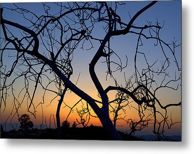 Metal Print featuring the photograph Barren Tree At Sunset by Lori Seaman