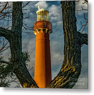 Metal Print featuring the photograph Barrny Thru The Trees by Nick Zelinsky