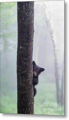 Bashful Bear Cub - Fs000230 Metal Print