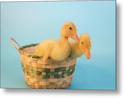 Basket Of Fun Metal Print