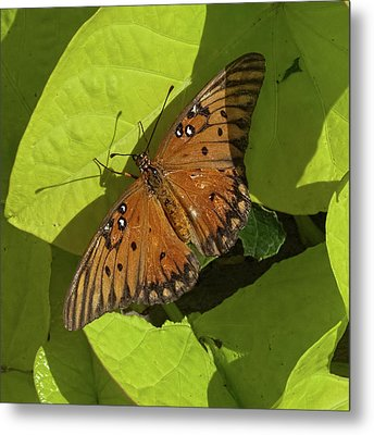 Metal Print featuring the photograph Basking Butterfly by Michael Flood