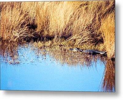 Basking In The Sun Metal Print by Jan Amiss Photography