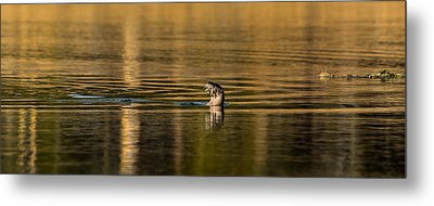 Metal Print featuring the photograph Basking In The Sunset Light by Yeates Photography