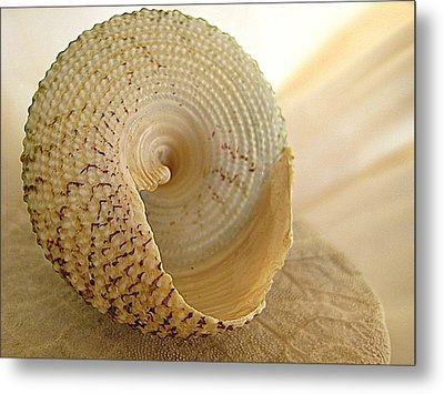 Basking Seashell Metal Print
