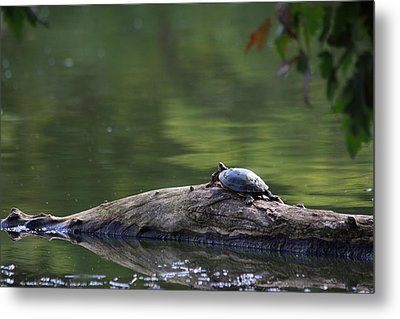 Metal Print featuring the photograph Basking Turtle by Lyle Hatch