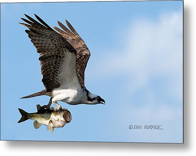 Metal Print featuring the photograph Bass Master 4 by Don Durfee