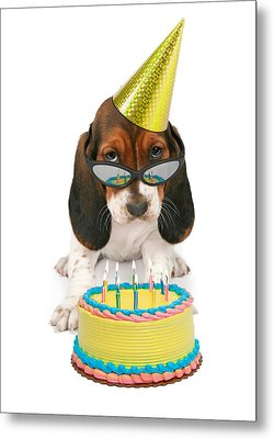Basset Hound Puppy Wearing Sunglasses  Metal Print by Susan Schmitz