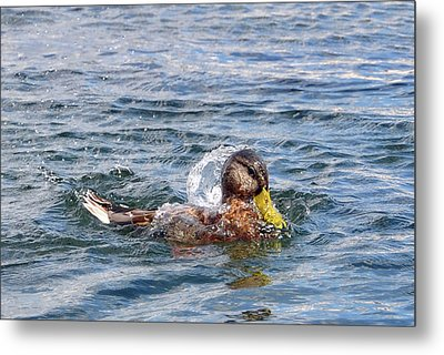 Metal Print featuring the photograph Bath Time by Glenn Gordon