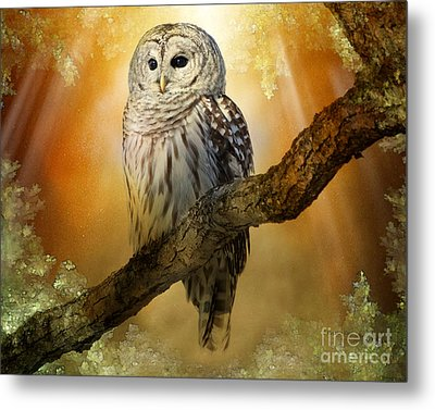 Bathed In Light  Metal Print by Heather King