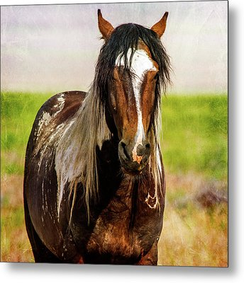 Metal Print featuring the photograph Battle Worn Stallion by Mary Hone