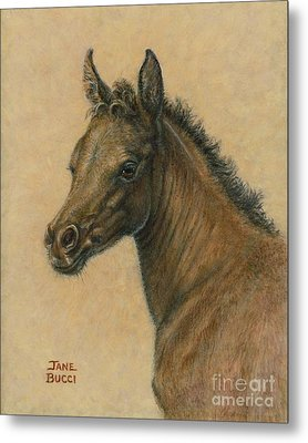 Metal Print featuring the painting Bay Colt by Jane Bucci