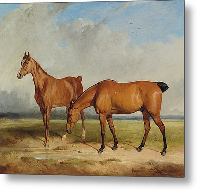Bay Hunter And Chestnut Mare In A Field Metal Print