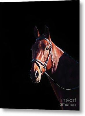 Bay On Black - Horse Art By Michelle Wrighton Metal Print