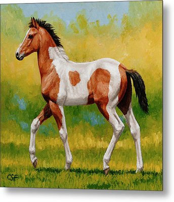 Bay Pinto Foal Metal Print by Crista Forest