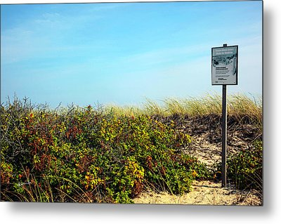 Metal Print featuring the photograph Be Kind To The Dune Plants by Madeline Ellis