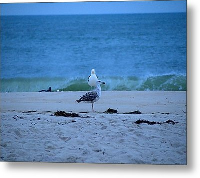 Metal Print featuring the photograph Beach Birds by  Newwwman