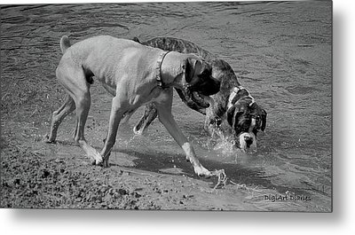 Beach Buddies Metal Print by DigiArt Diaries by Vicky B Fuller