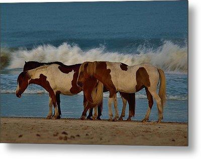 Beach Bum Ponies Metal Print by William Bartholomew