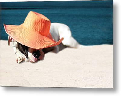Metal Print featuring the photograph Beach Day For Bubba by Shelley Neff