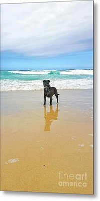 Metal Print featuring the photograph Beach Dog And Reflection By Kaye Menner by Kaye Menner